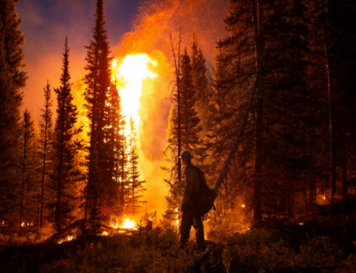 Talking Green: Finding Connections: Forests, fire and water